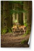 Antilope în pădure