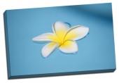 Floare pe un lac albastru