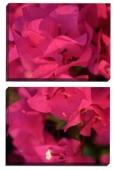 Fori roz