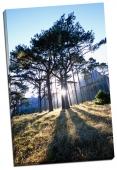 Pâlc de copaci la răsărit