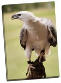 Pasăre de pradă