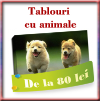 Tablouri animale
